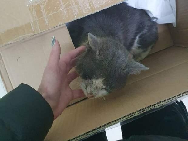 Люди не поняли, как в магазине появился кот. Бродяга падал от слабости, но от есть не хотел