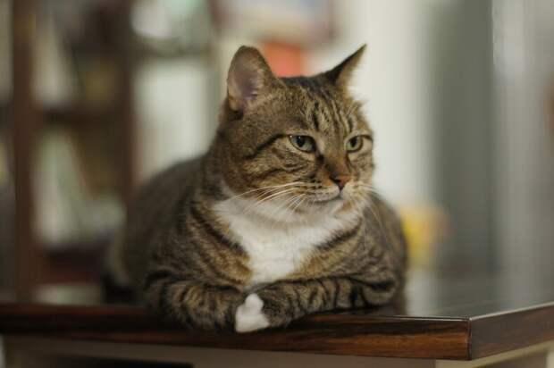 Рейтинг стран, где живет рекордное количество кошек: на каком месте Россия? (статистика вас не на шутку удивит)