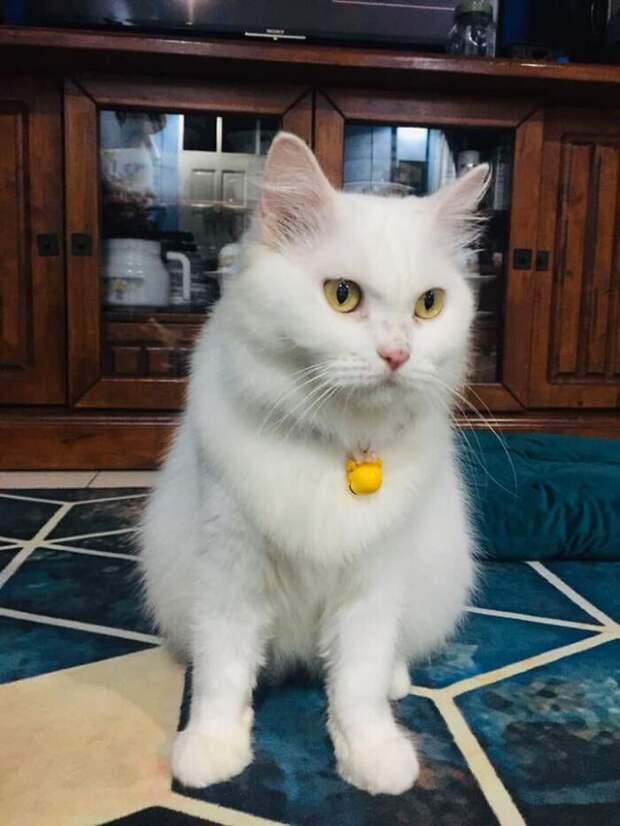 Любовь и забота творят чудеса: невероятное преображение спасенной кошечки