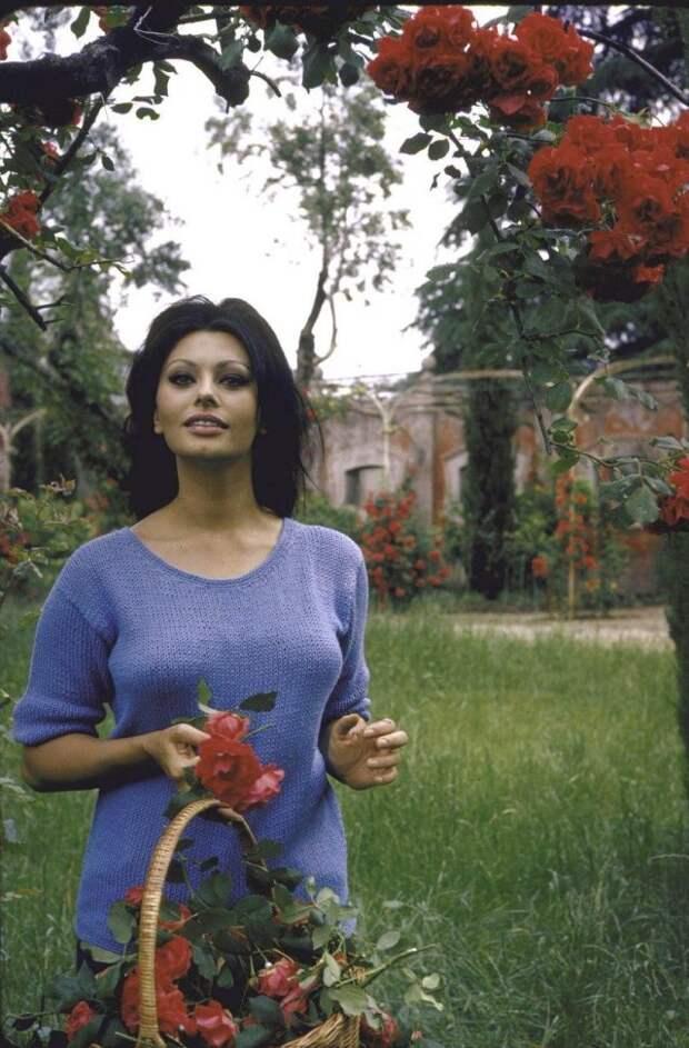 Софи Лорен, 1964 год