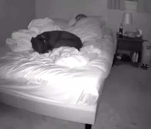 Девушка установила камеру над кроватью, чтобы узнать, что делает ее пес по ночам