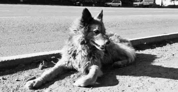 Найда. История русской собаки, которая хозяина ждала дольше, чем Хатико