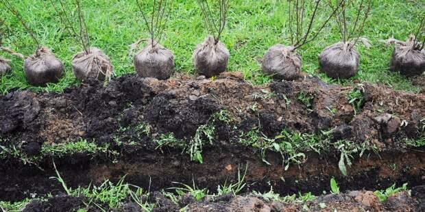 Депутаты Головинского согласуют список адресов для посадки деревьев 25 мая