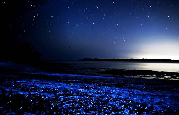 Ла Паргуэра, Ладжас, Пуэрто-Рико В Пуэрто-Рико насчитывается целых три биолюминесцентных залива. Один из них — Ла Паргуэра. Лучшим временем для посещения является период размножения планктона, когда все вокруг окрашивается в голубые тона.