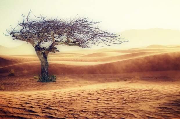 Искусственный интеллект обнаружил 2 млрд деревьев в пустыне