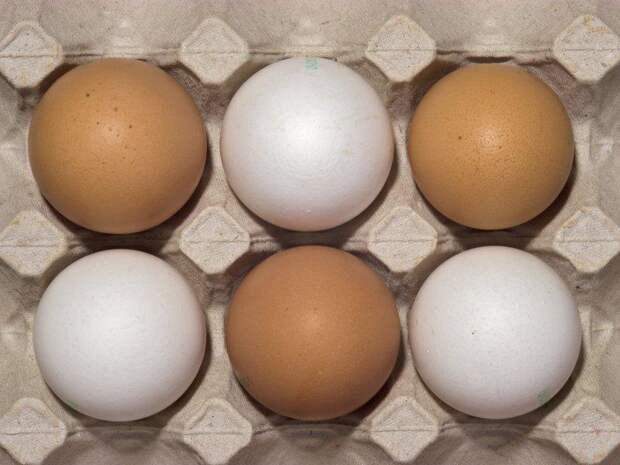 Россиянам рассказали, как выбрать качественные яйца