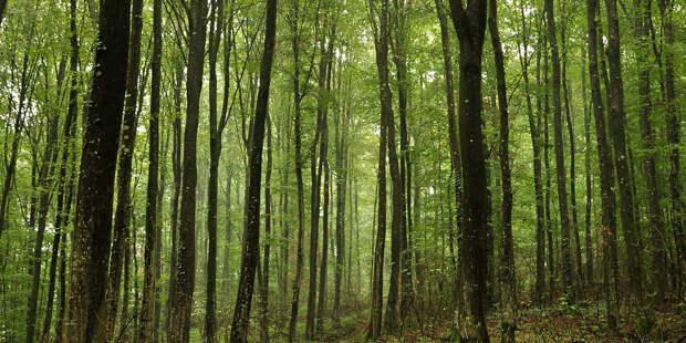 У Абрамченко кто в лес, кто по дрова