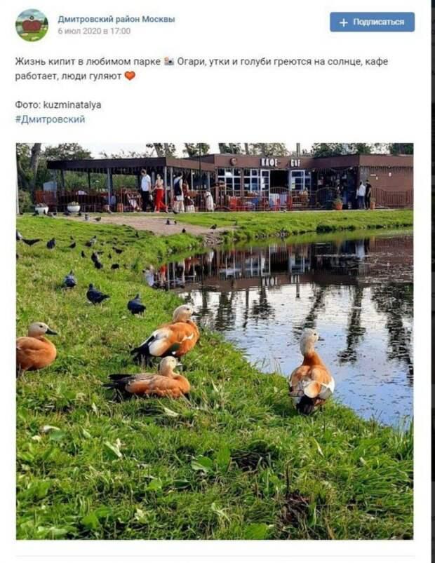 Фото дня: «жизнь кипит» в парке Дмитровского района