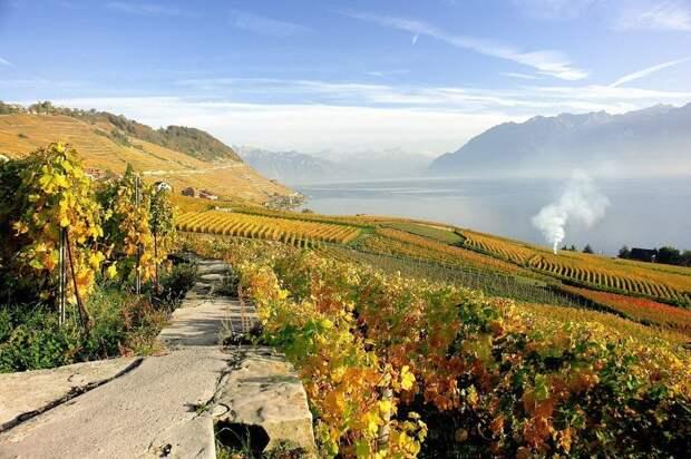 Террасовые виноградники Лаво в Швейцарии, которые основали еще древние римляне