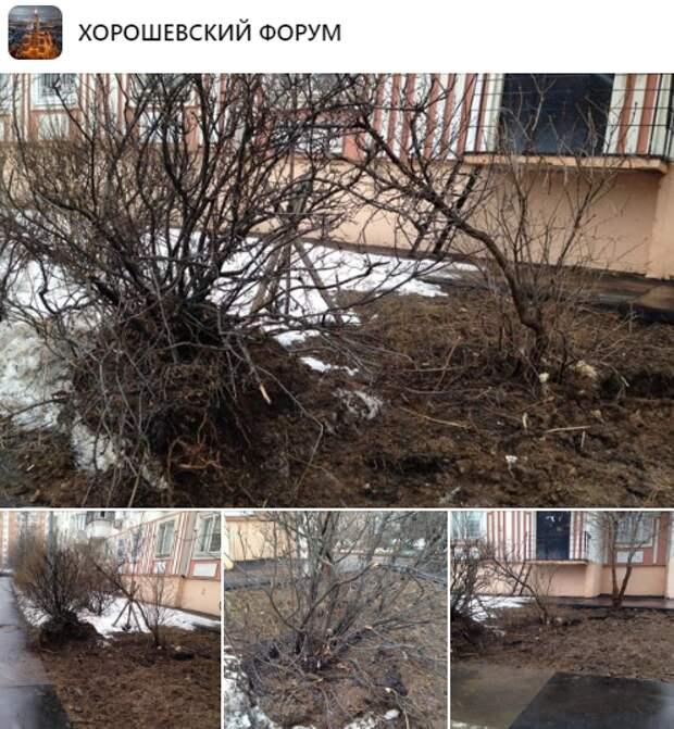 Кустарник на улице Полины Осипенко повредил канал водоснабжения