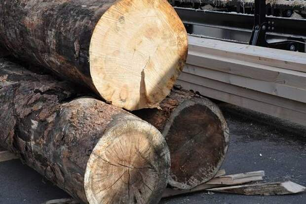 Лесные участки в Приморье теперь можно арендовать на 49 лет