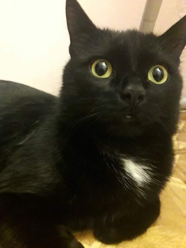 Котик остался один в пустой квартире.. Ему очень нужна помощь!