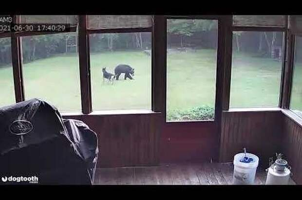 Собака поиграла смедведем водворе дома американки