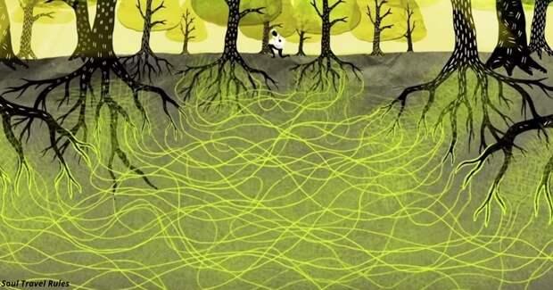 Деревья умеют любить, обниматься и даже заботиться друг о друге как семейная пара
