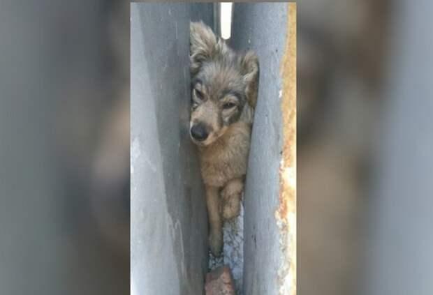 Жительница Омска спасла плотно застрявшую между гаражами собаку