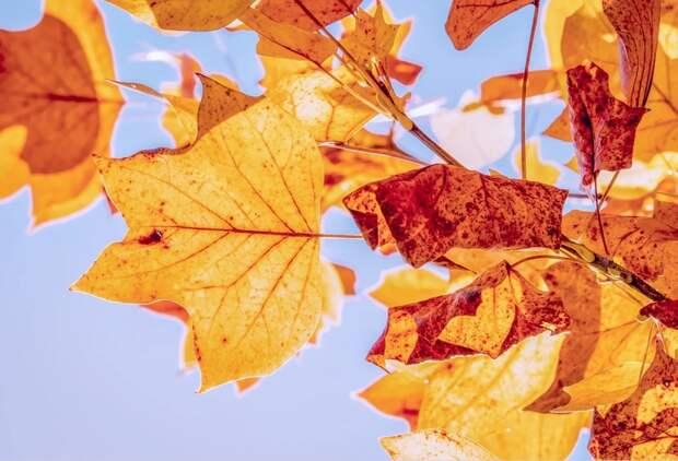 Синоптики рассказали о погоде в ноябре