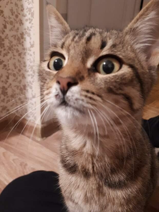 Кошки бывают очень выразительны и эмоциональны!