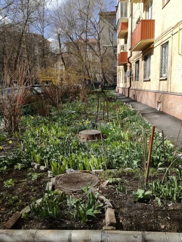 Сад за март и апрель 2020