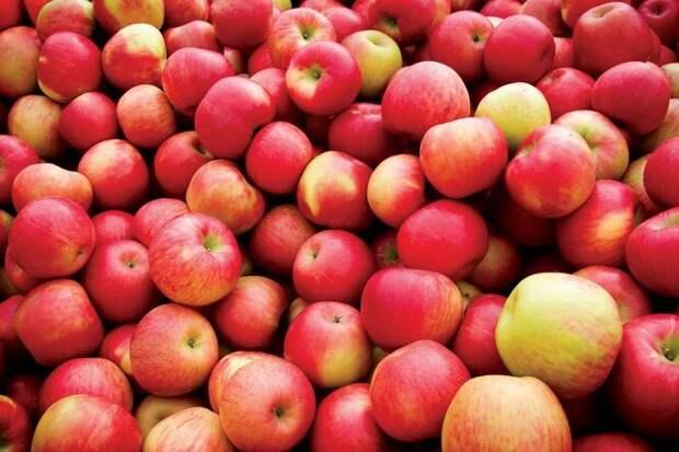 Яблоки тоже имеют «привычку» накапливать в семенах синильную кислоту, хотя в них её концентрация в полтора раза меньше, чем в вишне. Если не объедаться горьковатыми яблочными семечками напропалую, угрозы жизни не возникнет.