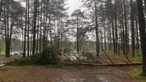 Часть Лужского района Ленобласти из-за грозы на время осталась без света
