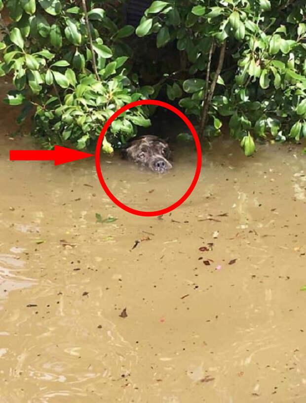 После наводнения две собаки умудрились продержаться в воде более 16 часов