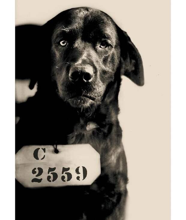 Как пёс по кличке Пеп в 20-е годы был приговорен к пожизненному заключению