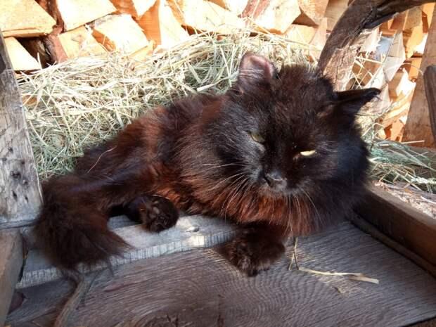 Вот он-кот Бегемот! Один из спасённых мной котов :)