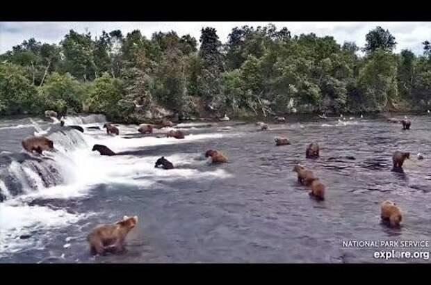 Медведи устроили себе «пляжную вечеринку»