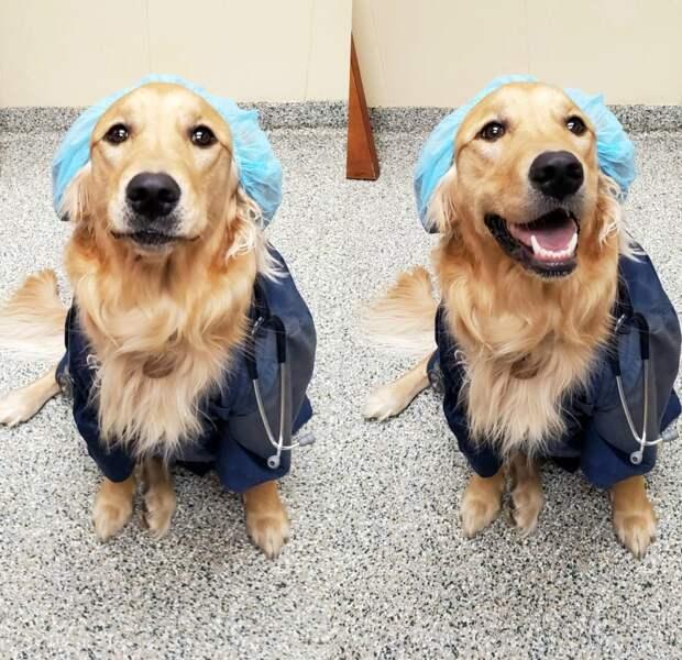За что ветеринары так обожают свою работу