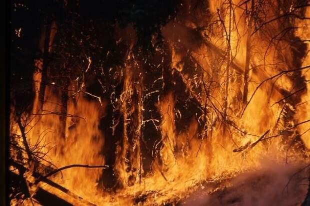 В тюменских лесах с 11 мая вводится режим ЧС