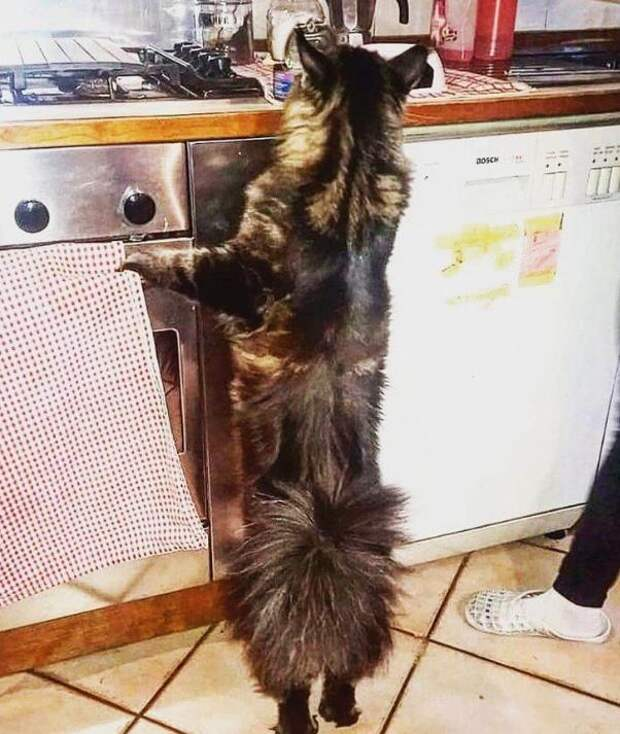Как выглядит самый длинный кот в мире