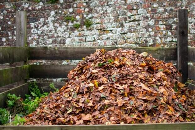Перегной листовой