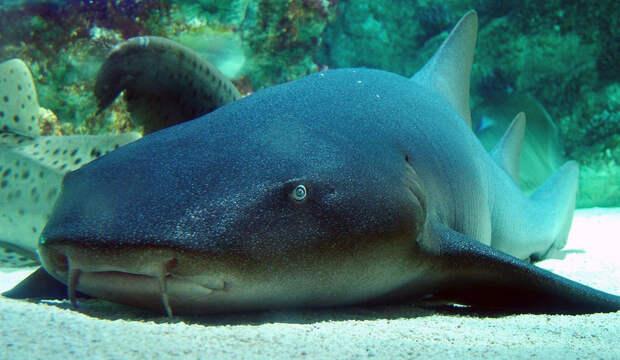 Грозные хищники морей и океанов