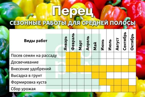 Календарь ухода за перцами