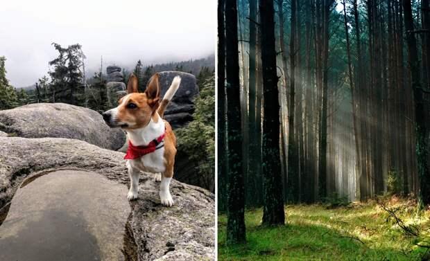 Пес затащил хозяина в чащу леса и не зря. Там была работа для спасателей