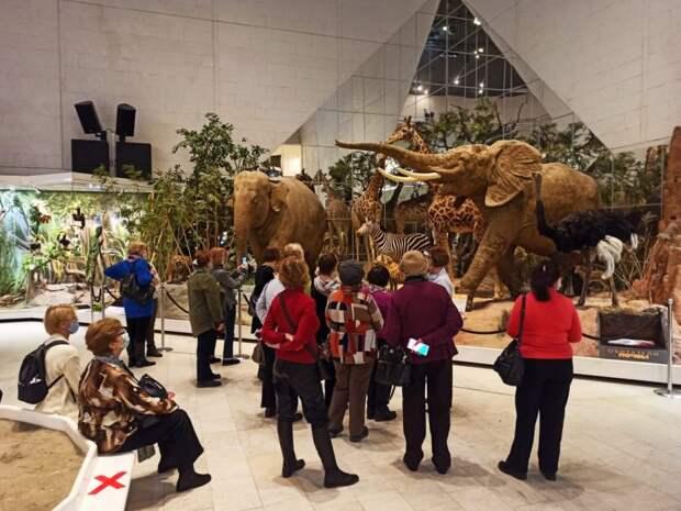 ЦСО «Сокол» побывали в Дарвинском музее