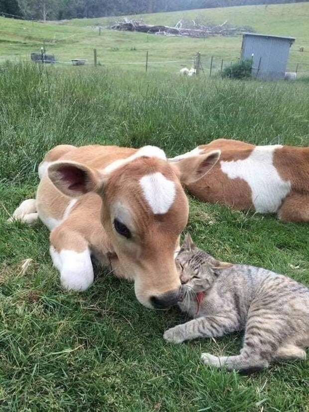 13 очаровательных примеров дружбы между животными