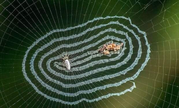 Доставайте огнемет: 15 самых странных пауков мира