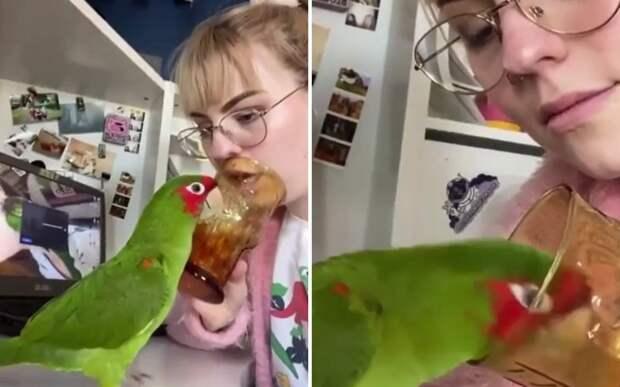 Попугай поддержал хозяйку в ее дурачествах и очаровал пользователей Сети