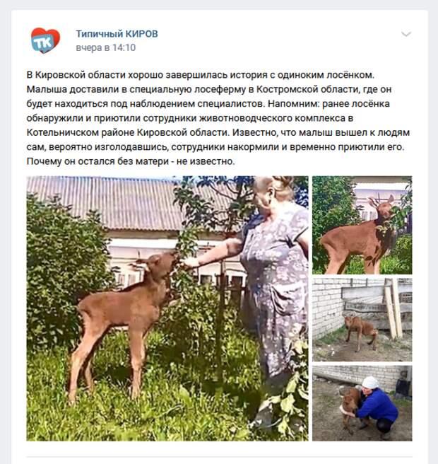 Оставшегося без матери лосенка будут выхаживать на ферме в Костромской области