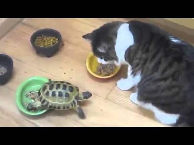 Озверевшая черепаха открыла сезон охоты на котов