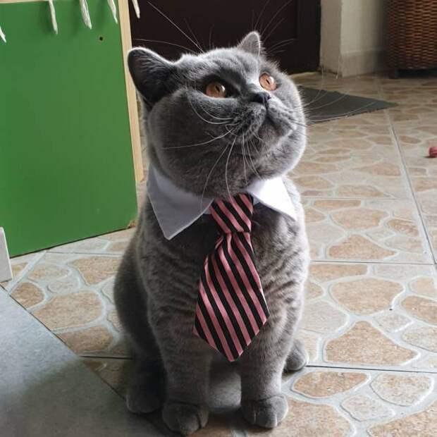 Вот в галстуке