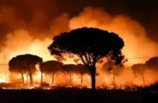 Пожар уничтожает леса в Испании