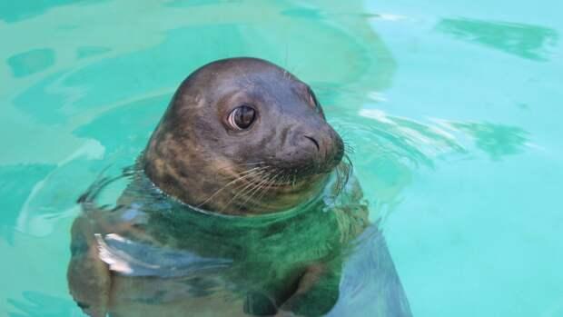Экоцентр в Дагестане опроверг информацию о безопасности рыбацких сетей для тюленей