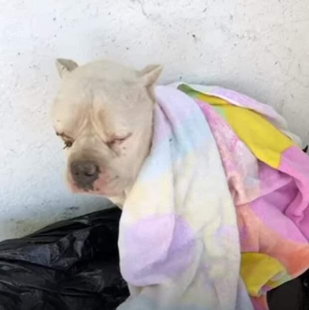 На мешке с мусором лежала собака. Исхудавшая и грязная, она уже не надеялась на спасение