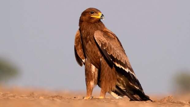 Спасённый орел поселился неподалёку и начал подкармливать собаку с кошкой