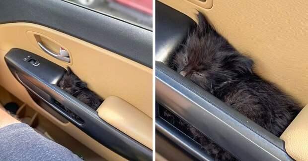 Очаровательные котята, которые вырастут и будут врачевать людские души
