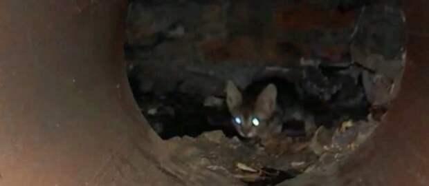В Харькове добрые люди спасали котика, который 3 дня просидел в канализации
