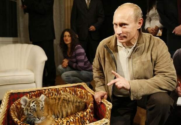 Путин и тигренок