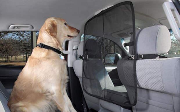 Подвижный груз - как правильно перевозить домашних животных
